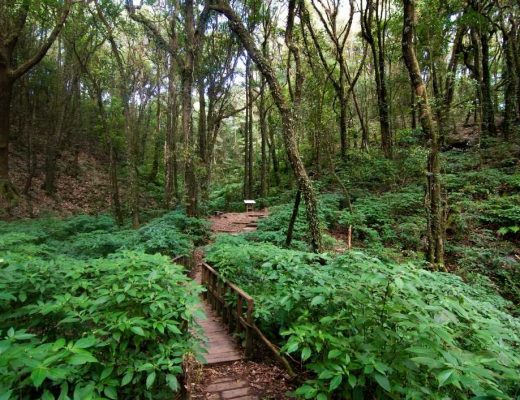 Is it Worth Visiting Doi Inthanon National Park in Chiang Mai Thailand?