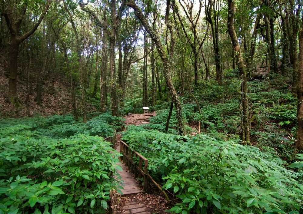 Rainforest in Doi Inthanon National Park Thailand