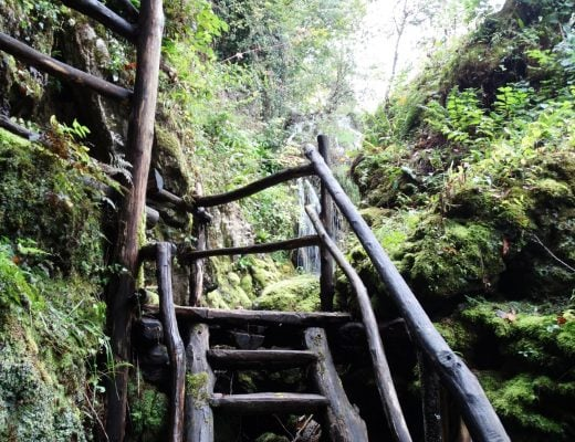 Mysterious Staircases in the Woods