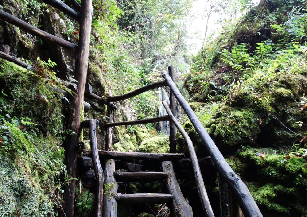 Mysterious stairs in the wood forest jungle
